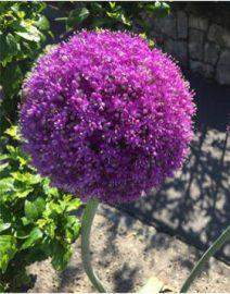 kertész